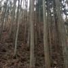 1本物の杉の大桁化粧材 山林への視察 城屋根の家の目玉品