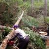 杉の木 伐採&運搬
